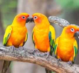 Les 5 meilleurs livres sur les perroquets
